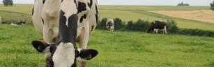Des fermes, pas des usines : rendez-vous le 3 mars